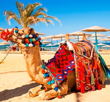 Transporte Egipto
