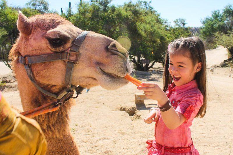 Mejores lugares para niños en Egipto
