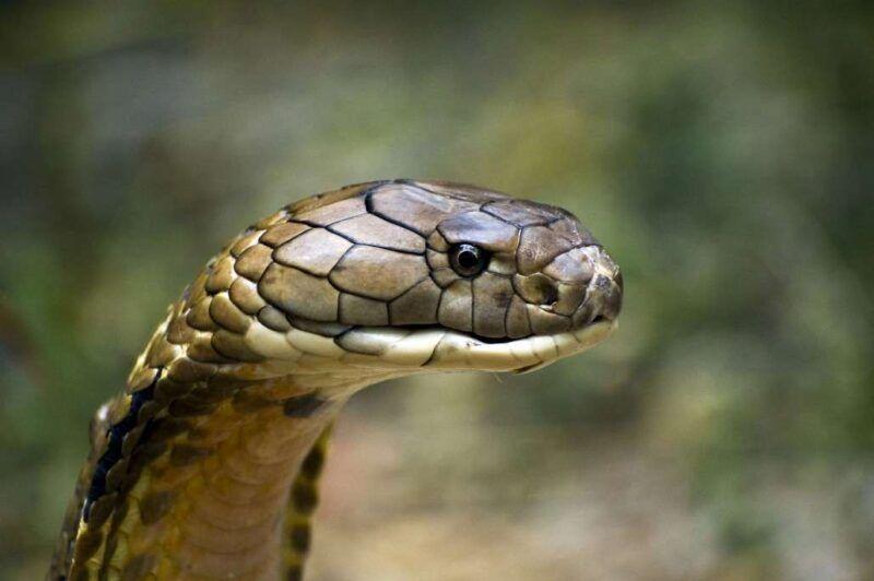 Animales peligrosos en Egipto