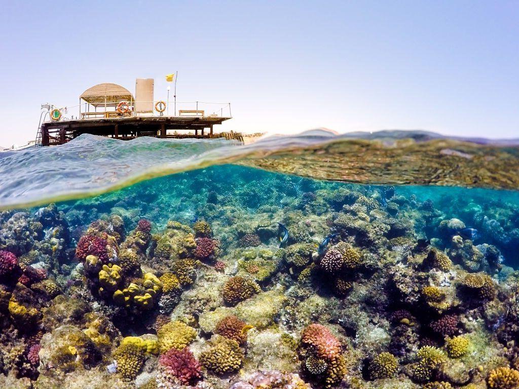 Snorkeling en Safaga