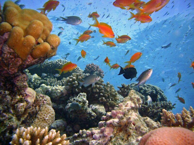 Arrecifes de Corales